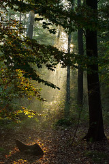 Forest Morning, Gorinsee, Brandenburg, Germany (Xindaan) Tags: morning autumn light brown sun sunlight mist plant tree green fall nature leaves fog backlight forest sunrise germany landscape geotagged outdoors deutschland dawn licht leaf flora nikon scenery europa europe day nebel tag herbst natur pflanze himmel sigma nopeople bosque alemania dmmerung grn braun landschaft sonne wald sonnenaufgang allemagne morgen brandenburg 70200 baum fort d3 germania backlighting 2010 gegenlicht bosco foresta 70200mm telezoom  70mm f13 sonnenlicht 7020028 beautyinnature sigma70200f28exdghsm nonurbanscene basdorf 101010 gorinsee d3s