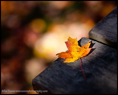(PhotoBal) Tags: autumn london fall leaf d3 85mmf14 tgamphotodeskcolour
