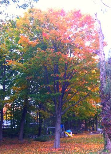 Trumbull fiery foliage.