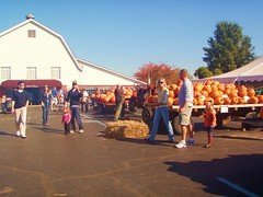 people outside around a big table piled high with orange pumkins and a big white barn in the background