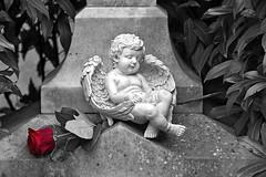 The rose and the sleepy angel (NRG Photos) Tags: friedhof cemetery grave rose angel cutout germany deutschland sleepy engel grab darmstadt alterfriedhof selectivecolour schläfrig selektivefarbe