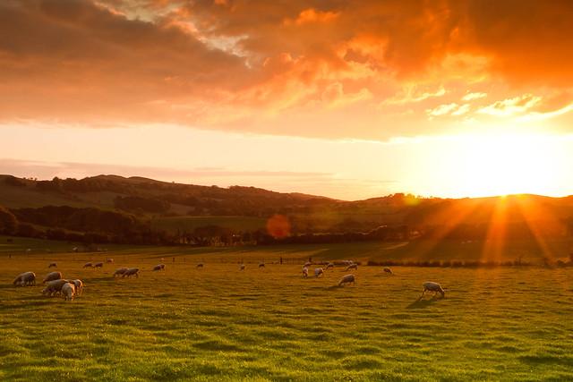 Golden Fleece, Dorset