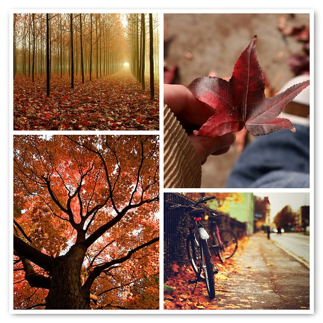 [Things I ♥ Thursday]  The changing leaves of autumn