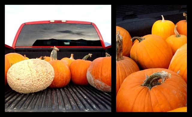 Pumpkinsintruck
