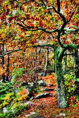 The Trail (☩ D L Ennis) Tags: autumn fall virginia blueridgemountains blueridgeparkway appalachiantrail thetrail georgewashingtonnationalforest dlennis sidetrail