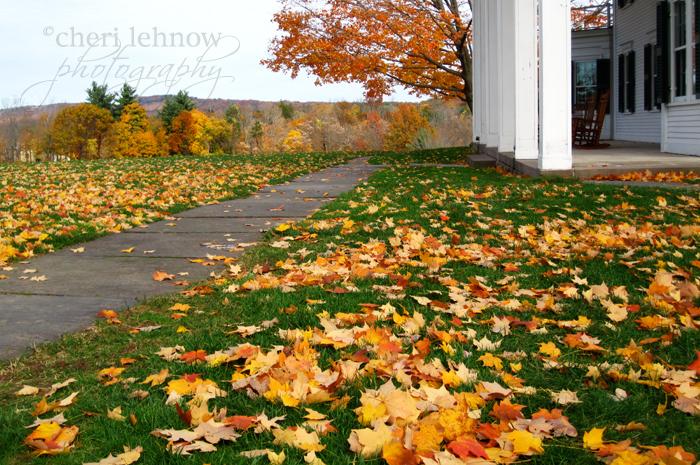 IMG_3622_leaves.jpg