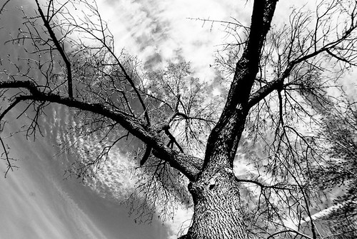 Tree shot with wide angle lens and circular cloud formation