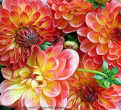 Colored Dahlias (creationsbycathie) Tags: pink flowers green art nature floral yellow canon photography flora northwest pdx portlandoregon dahlias pdxart yellowdahlias pinkdahlias northwestart mostbeautifulflowers orangedahlias oregonart oregonphotography shockmypiceffect