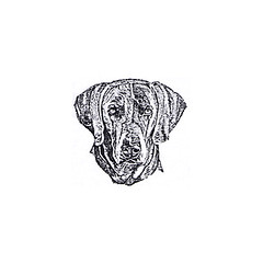 weimaraner on paper (RubberShow) Tags: dog pet black cute animal scrapbooking paper puppy sweet craft ears rubber stamp weimaraner etsy rubberstamp rubberstamping craftsupplies papercrafts craftstamps