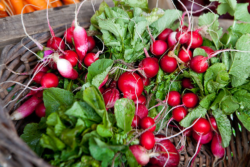 Beautiful radishes