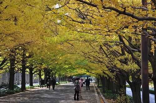 昭和記念公園 / SHOWA KINEN PARK