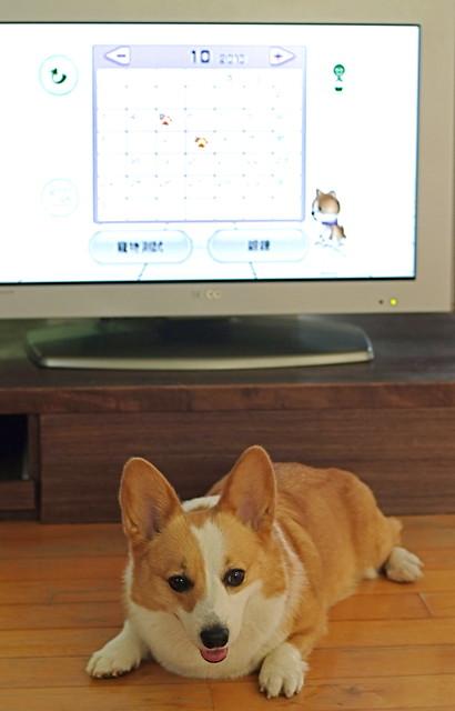 Pixnet-2010.10.09肥屁體重保鑣篇