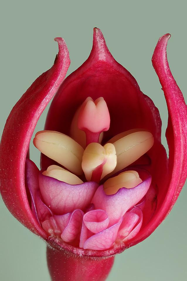 IMAGE: http://farm5.static.flickr.com/4108/5170774039_2b6cc26038_b.jpg