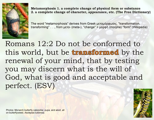 metamorphosis: Romans 12:2 illustrated