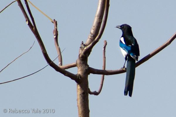 RYALE_Shaanxi_Birds_14