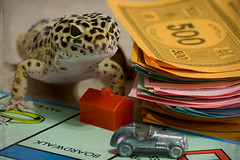 Money Power Women (SavingMemories) Tags: pet money game smile movie fun women power lizard monopoly pedro spots boardwalk movies gecko boardgame playful scarface leopardgecko alpacino tonymontana monopolymoney hansome savingmemories moneypowerwomen whenyougetthemoneyyougetthepowerwhenyougetthepoweryougetthewomensuemoffett usedonnov142010