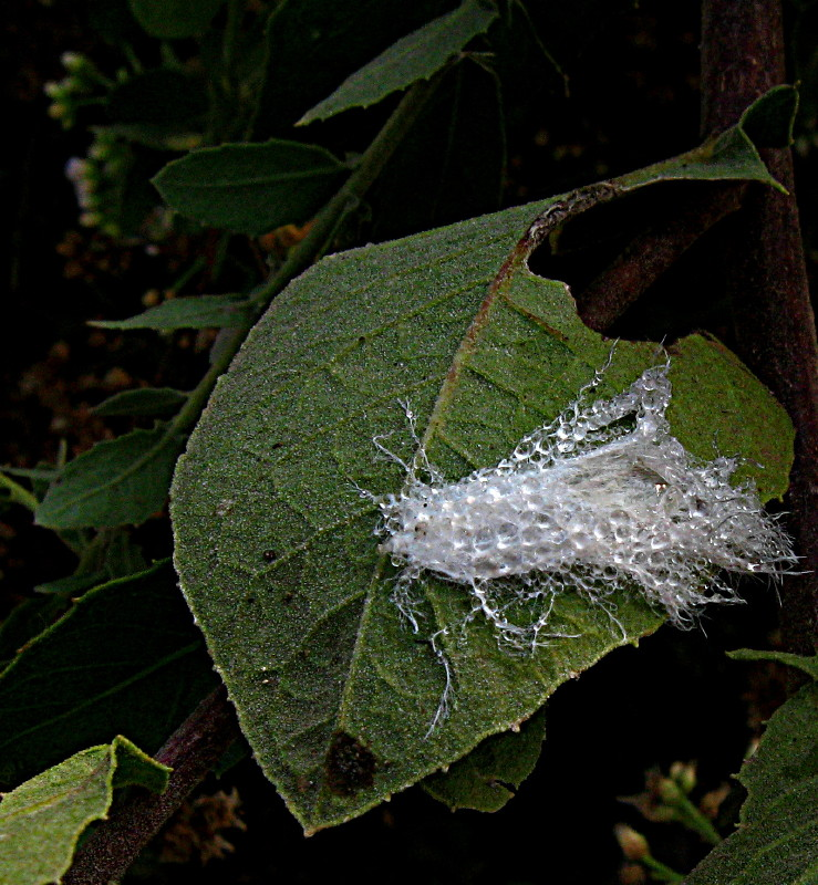13-11-2010-dew-feather