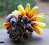 little pinecone turkey