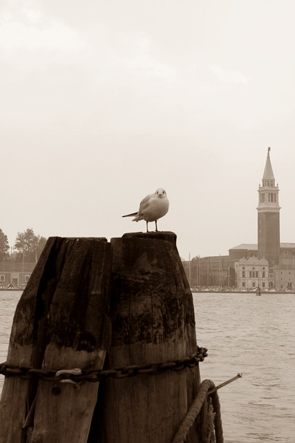 Venezia e...gabbiani