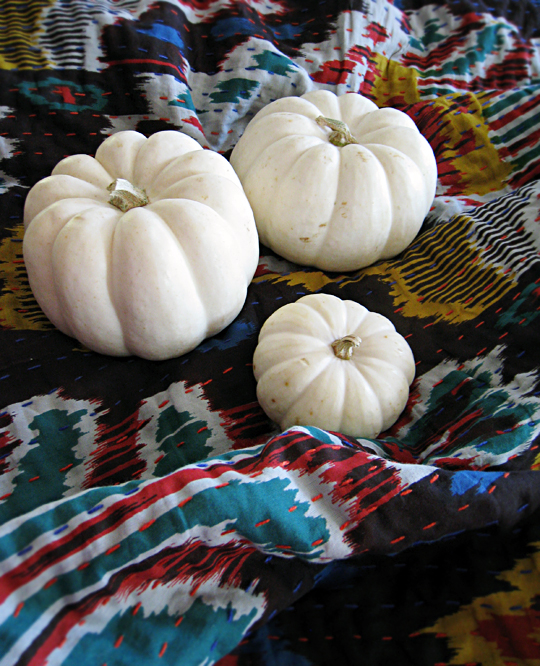 white pumpkins on ikat blanket