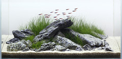 iwagumi fts (George Farmer) Tags: aquarium fishtank aquascape natureaquarium georgefarmer iwagumi ukaps aqueousartmovement