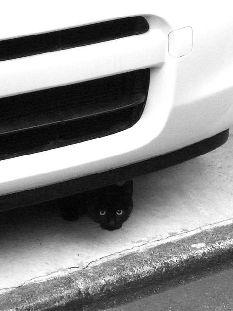 Today's Cat@2010-11-24