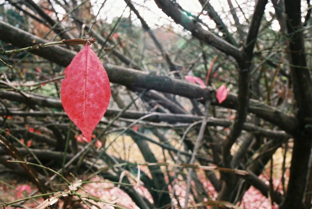 残った赤い葉