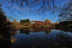 DSC_6158_ (Bokeh Heart(Broken Heart)) Tags: japan landscape tokyo nikon 1424 d700