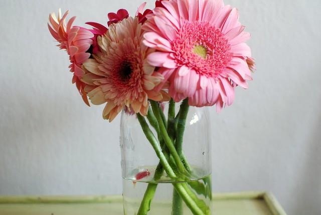 valentine's gerber daisies