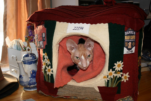 Roo, an orange and white Cornish Rex cat, peeks out from between the curtains in the door of a cat house.  Only his head is visible.  The cat house, made from felted wool, looks like a little house with siding and an appliqued pot of daisies on either side of the door.  His doting Grammy made it for him and it features actual insulation (the kind with a shiney metal layer to reflect heat) although that is not visible.