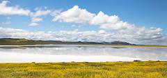 Beautiful Carrizo Plain (alicecahill) Tags: california usa landscape ©alicecahill sanluisobispocounty reflection sodalake nationalmonument spring lake wildflowers carrizoplain flowers