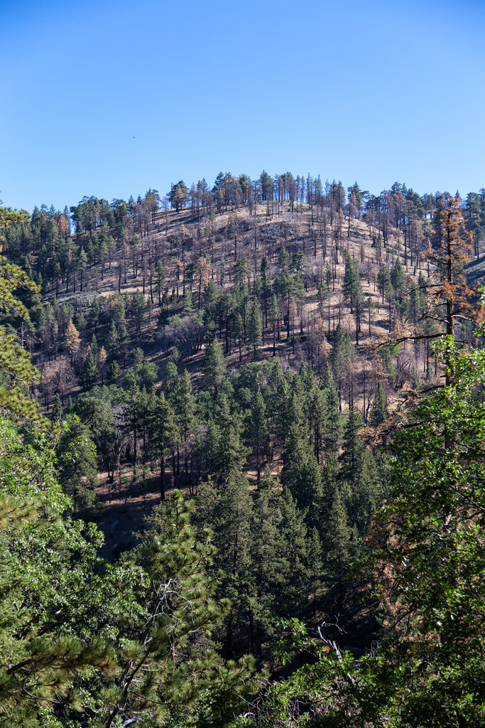 Wrightwood Elevation : The world s best photos of angelesnationalforest and