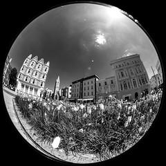 Untitled (agataurbaniak) Tags: hove brightonandhove leica m monochrom leicamonochrom typ246 type246 246 monochromatic blackandwhite nikkor 8mm28 8mm nikkor8mm28 nikkor828 ais fisheye circular circularfisheye