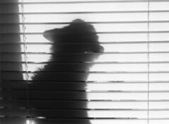 peter (kaumpphoto) Tags: cat bw mamiya shadow blinds 3200