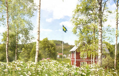 Greetings from idyllic  Sweden (Birgitta Sjostedt) Tags: landscape summer midsummer redcottage cottage idyllic traditional flag sign birch leaves leaf grass lilac flower paint texture celebrate holiday countryside rural sweden highcoast magicunicornverybest ie birgittasjostedt