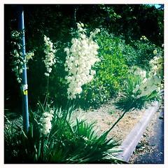 Summer Blossom 2