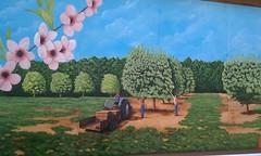 Cooper's Peach Farm