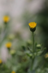 A tiny flowers (Takashi(aes256)) Tags: flower macro tiny 花 マクロ canoneos7d canonef100mmf28lmacroisusm