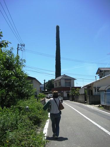 大崎上島 町の風景 写真19