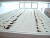 frammenti di nido scomposti al museo