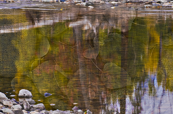 Reflections on the Methow with Leaves