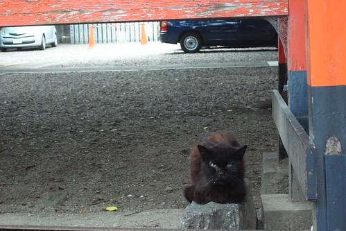 Today's Cat@2010-07-31