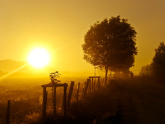 Dawn during Camino de Santiago :) wit na Camino :) (raphic :)) Tags: morning santiago sun tree saint yellow way landscape dawn james spain camino pilgrimage pilgrim droga espania poranek soce jakub wiato drzewo espaniol ty hiszpania posta czowiek wit wity platinumheartaward mygearandmebronze mygearandmesilver mygearandmegold pielgrzmka