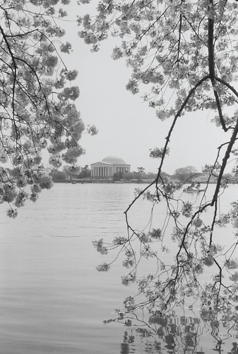 2010 National Cherry Blossom Festival Washington DC