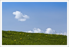 'Windows'  Bliss (jpatt1954) Tags: uk summer england sky green field grass clouds countryside peaceful bluesky cumbria relaxed yellowflowers 2010 whiteclouds whitefluffyclouds sigma105mmf28macro englishmeadow dandelionflowers 18may fujis5pro pscs4 pp2010