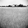 meadow (giovanegian) Tags: summer bw italy house 120 6x6 grass casa estate tranquility calm erba hedge 夏 modena calma voigtländer orage absence イタリア perkeoii tranquillità siepe assenza 牧草 foraggio 家  prontorsv モデナ colorskopar13580 存在  不在  静けさ  shanghaigp3100bn