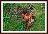 2 - 6 septembre 2010 Paris Square Claude-Nicolas Ledoux Noisettes (melina1965) Tags: paris macro sol fruits fruit nikon îledefrance pavement nuts september nut septembre 2010 noisette 75014 sols noisettes d80 photoscape geniiloci visualdelight 14èmearrondissement nikondslrforum