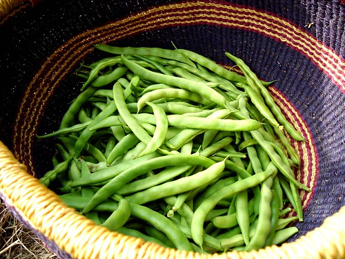 lots of pole beans
