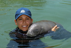 silvia with rescued baby manatee (ABC Dolphin Trainer Academy) Tags: manatee rehabilitation rescueanimalrescueanimalrehabilitationcancun