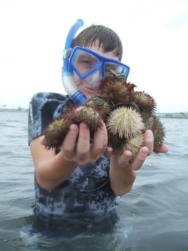 Aron with sea urchins